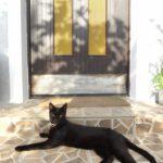 (日本語) 稼いでないのにセルビアで一軒家を借りて3ヶ月間DTM漬けの生活を送った夏
